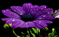 1446565203_purple-flower-wallpapers-1