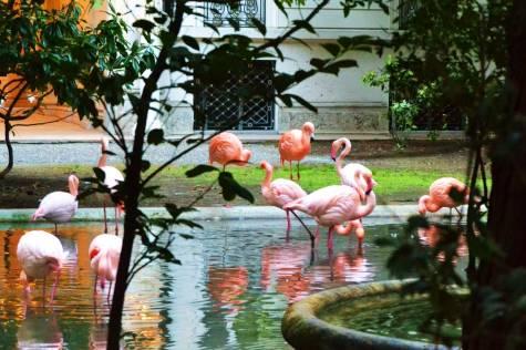 Flamingos rosados